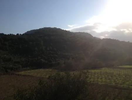 Dalaman, Kapıkargın - 67.200M2 Olive Grove