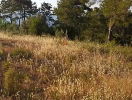 Dalaman, Elcik Village - 20,000 M2 Field For Sale